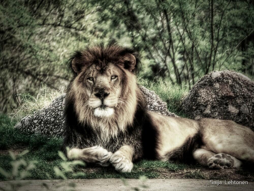 King of the Jungle  by Saija  Lehtonen