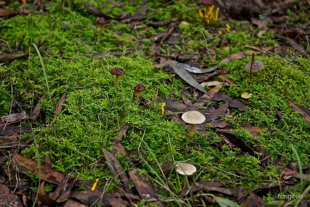Multi Fungi 1 by fungifun