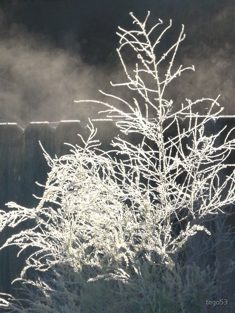 foggy, frosty morning by tego53