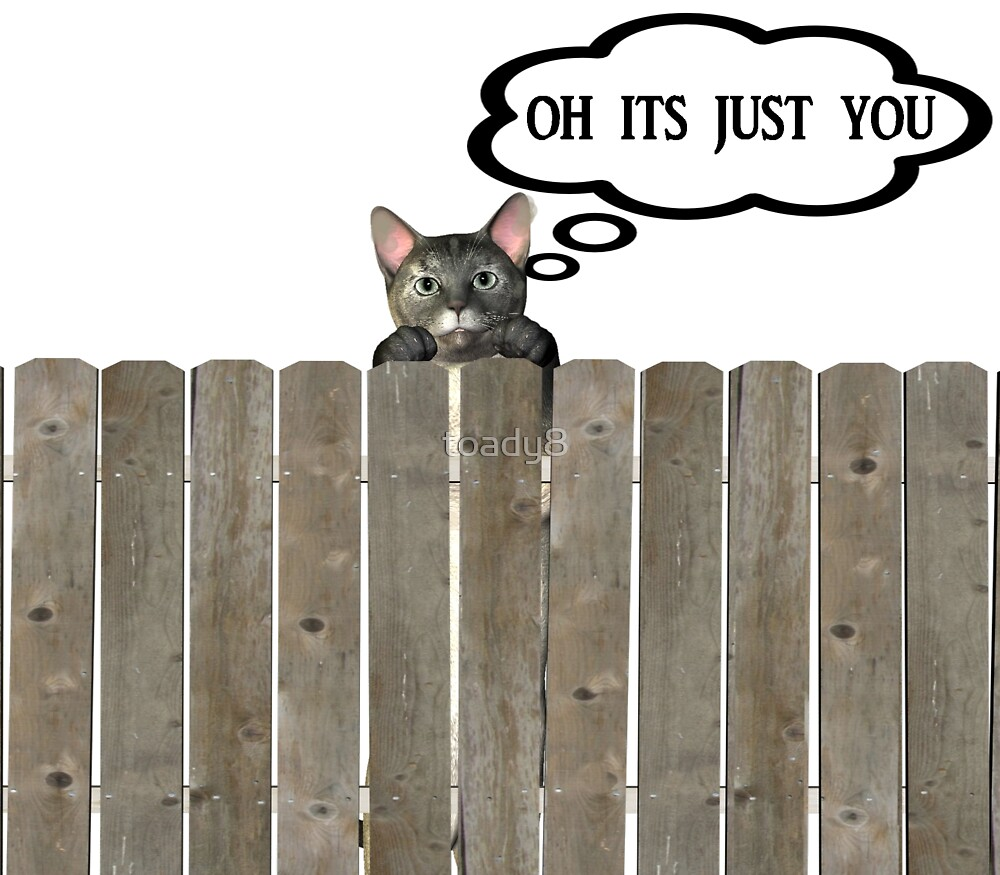 cat on fence by toady8