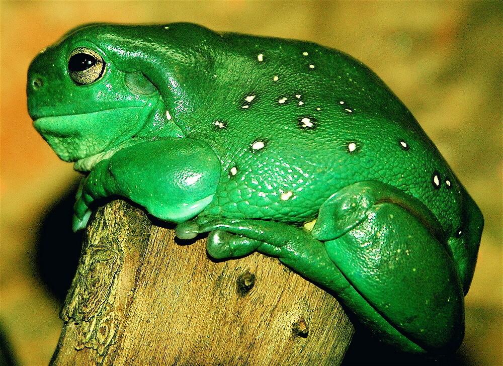 happy frog by gary kurzer