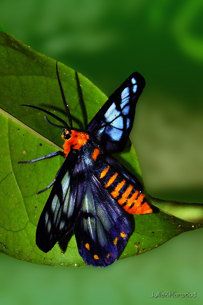 Butterfly by JuliaKHarwood