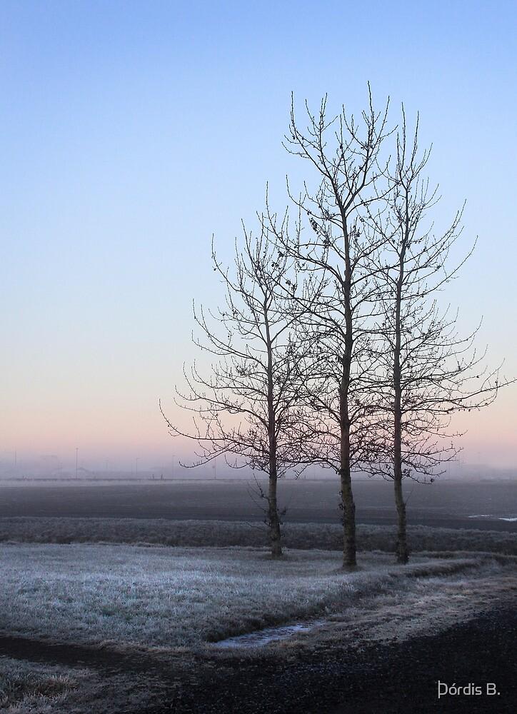3 trees by Þórdis B.