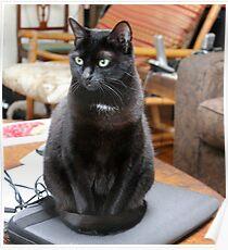 laptop cat Poster