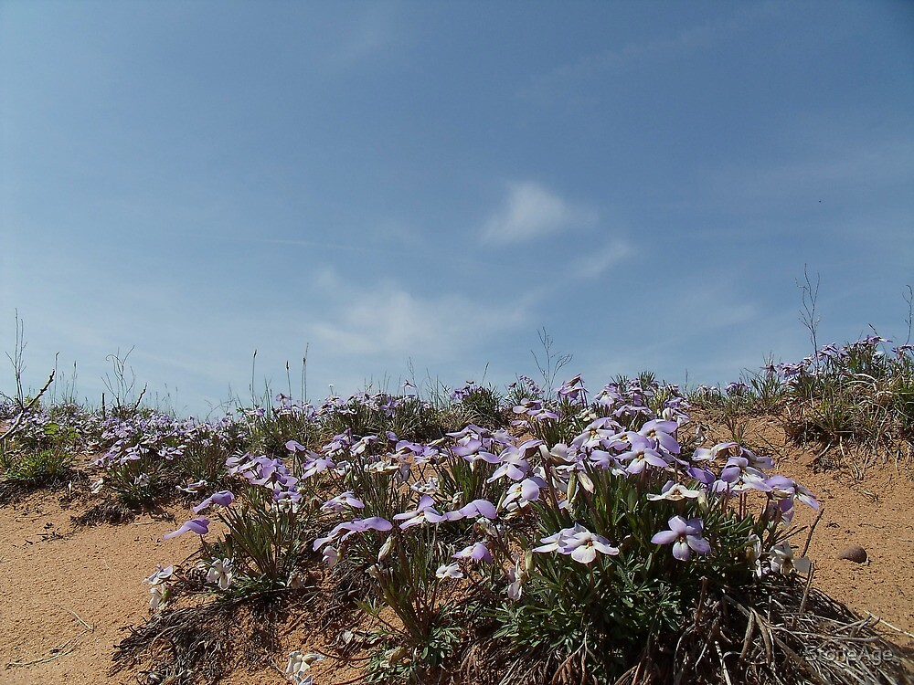 violets in the dunes by StoneAge