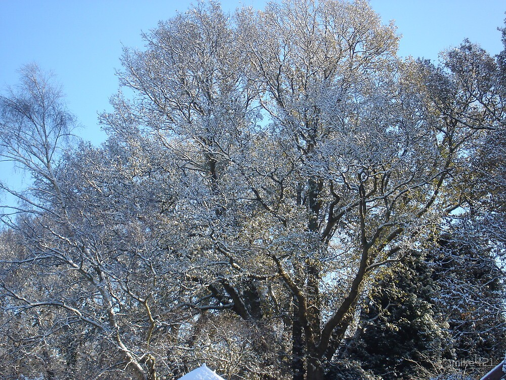 Snow covered Oak Tree by mike421