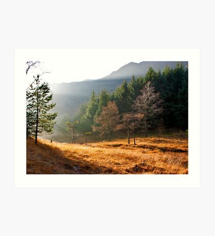 Mist in the Woods Art Print