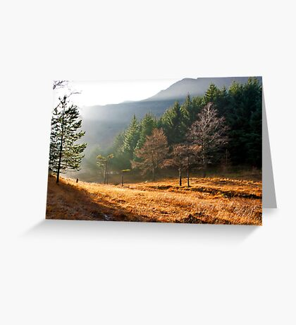 Mist in the Woods Greeting Card