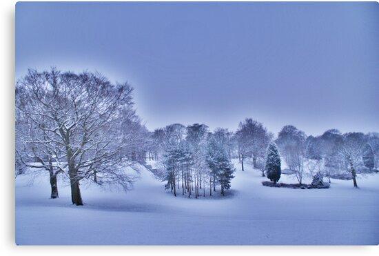Frozen At Day Break ~ Peel Park ~ by Sandra Cockayne