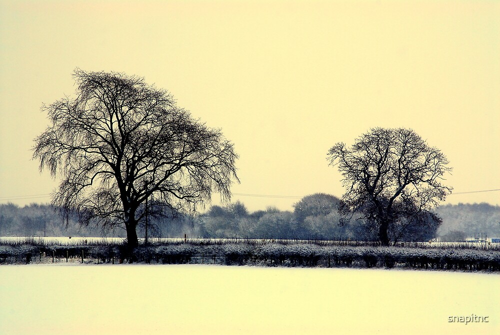 """""""A WINTER SCENE"""" by snapitnc"""