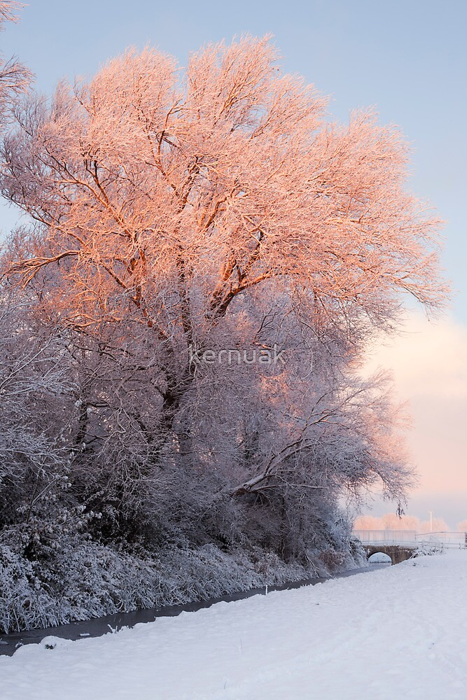 Winter Dawn Light by kernuak