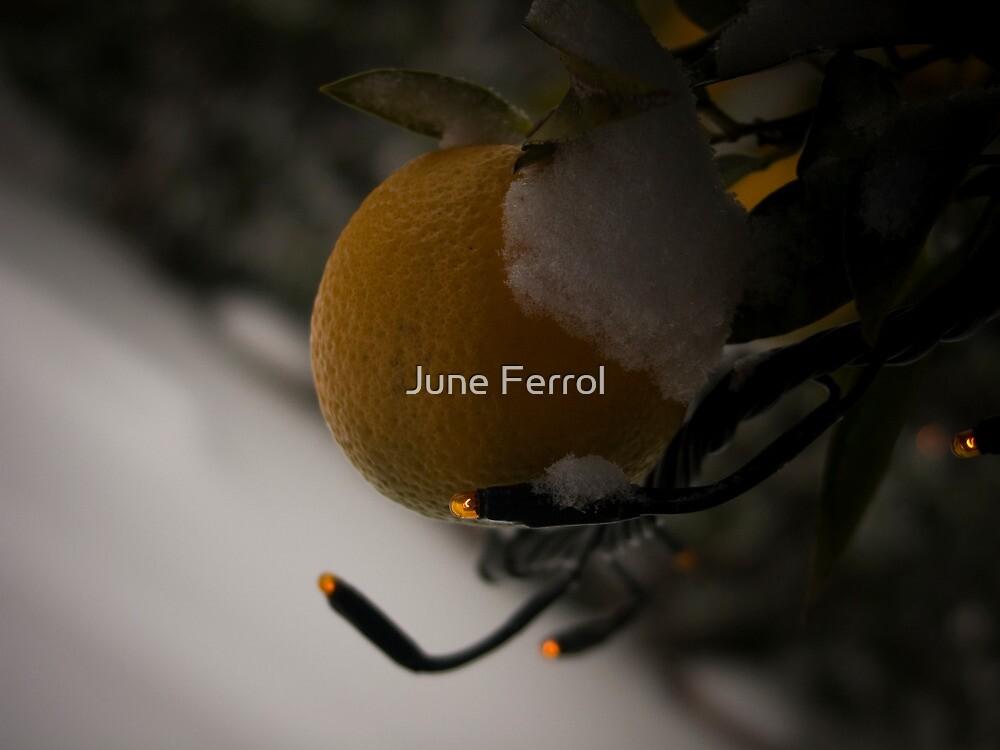 ORANGE BEAUTY by June Ferrol