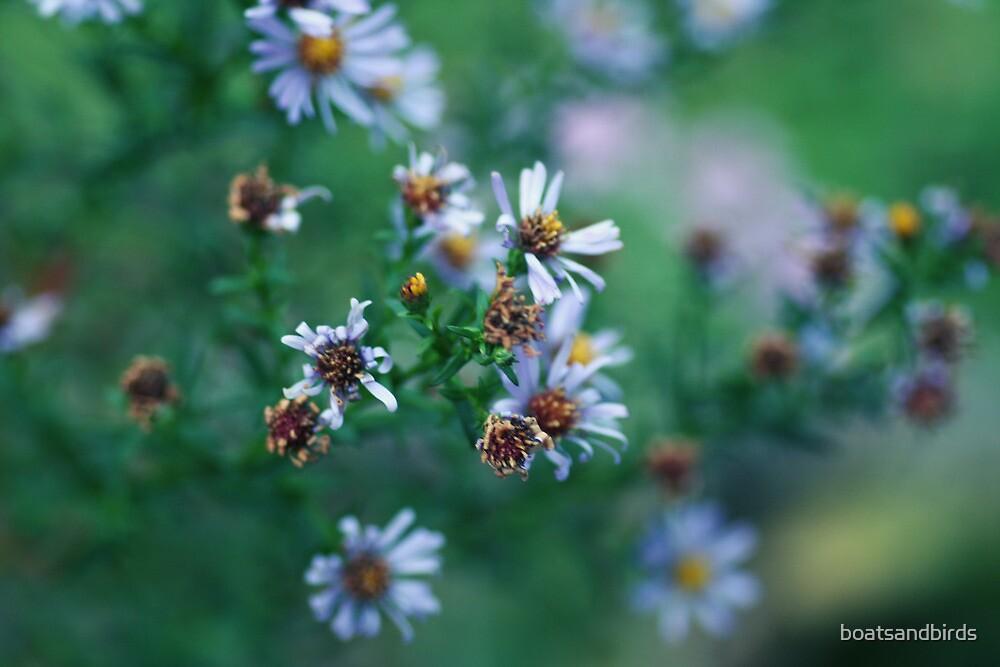 flowers by boatsandbirds