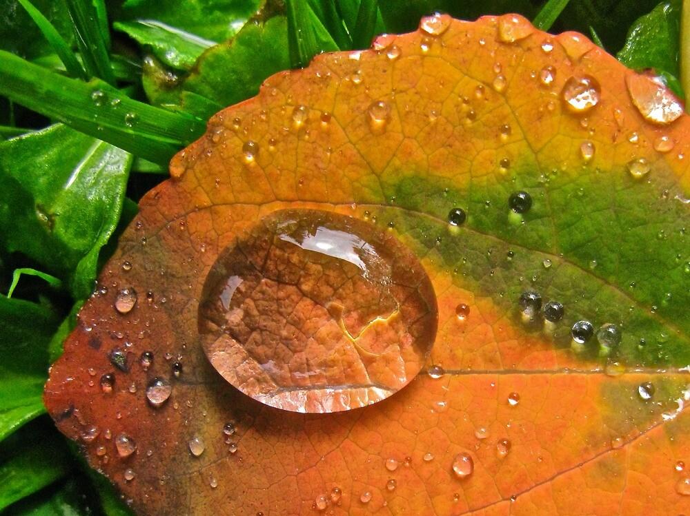 Fall Drop by Bettina Harvey