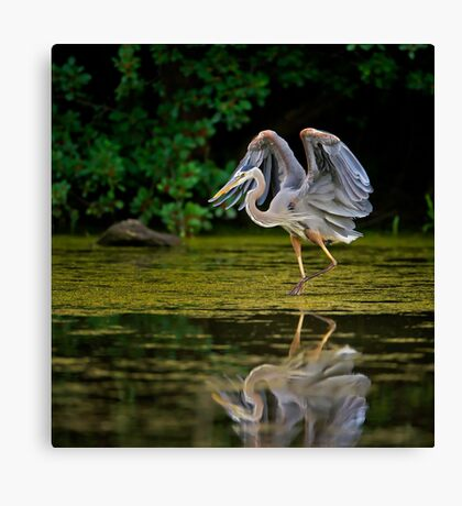 Just stretching my wings Canvas Print
