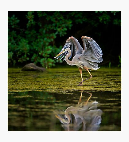 Just stretching my wings Photographic Print