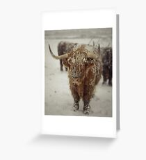 Highlands Snow Coo Greeting Card