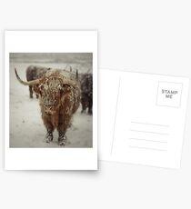 Highlands Snow Coo Postcards