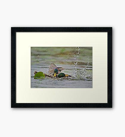 Attempted Drowning Framed Print