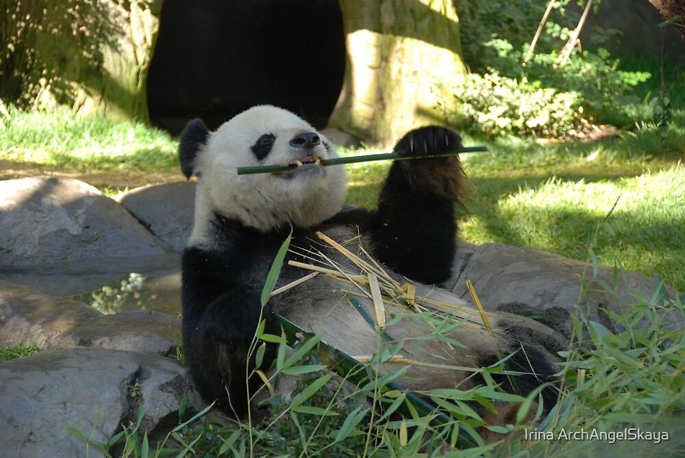 Happy Panda by Irina ArchAngelSkaya