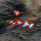 Dancing Clowns by Reef Ecoimages