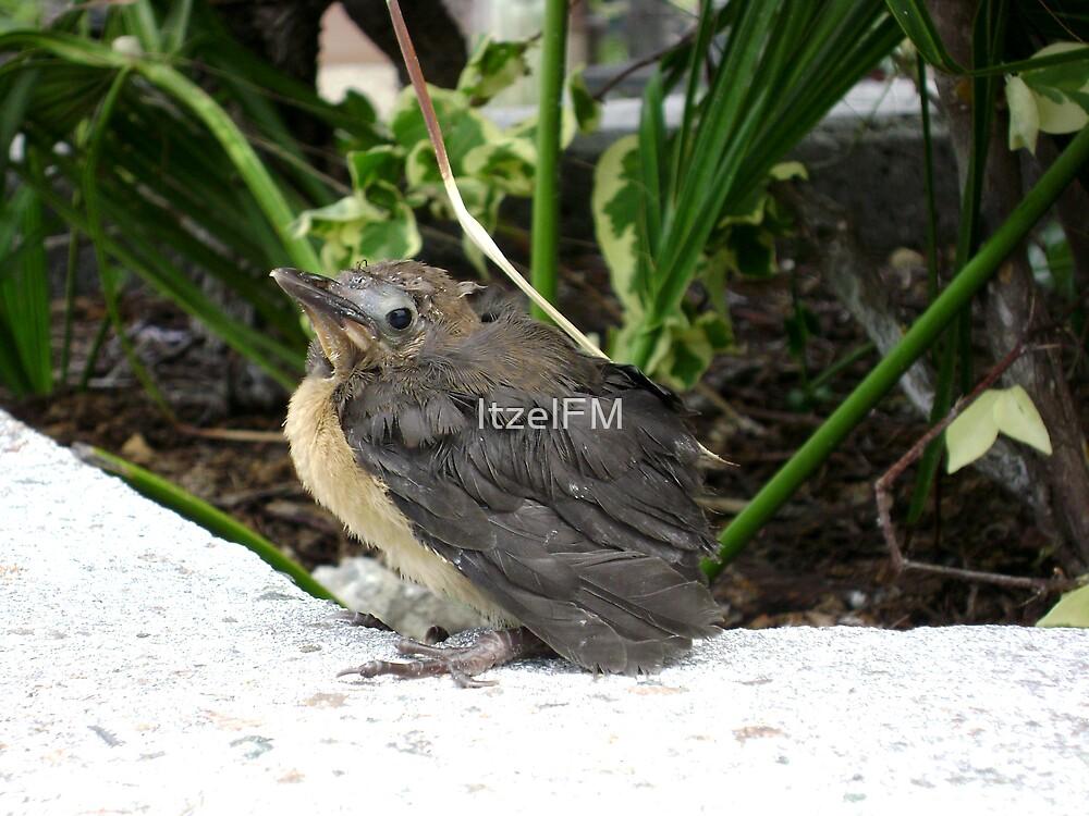 Lost Baby Bird by ItzelFM