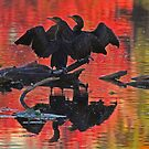 Synchronized silhouetted cormorants by Anthony Goldman