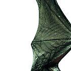 Bat wing by madworld