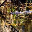 American Alligator by Frank Bibbins