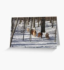 Snowy Woodlands Race -10 Greeting Card