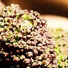 Broccoli  by DearMsWildOne