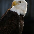 Majestic Freedom by Sheryl Unwin