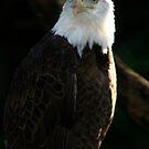 Majestic Freedom III  by Sheryl Unwin