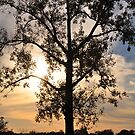Lake Manawa Tree by MaryLynn