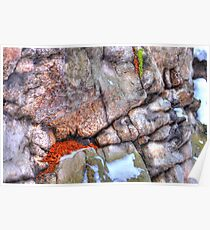 Squirrel Hole Poster