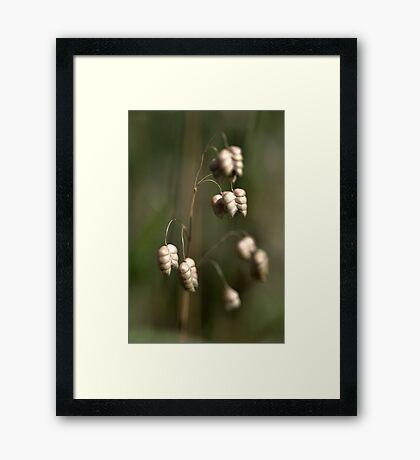 This Seasons Grasses Framed Print