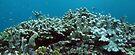 Binusa Point II by Reef Ecoimages