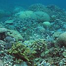 Binusa Point III by Reef Ecoimages