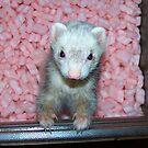 Popcorn in the Pink by Jezzy Wolfe