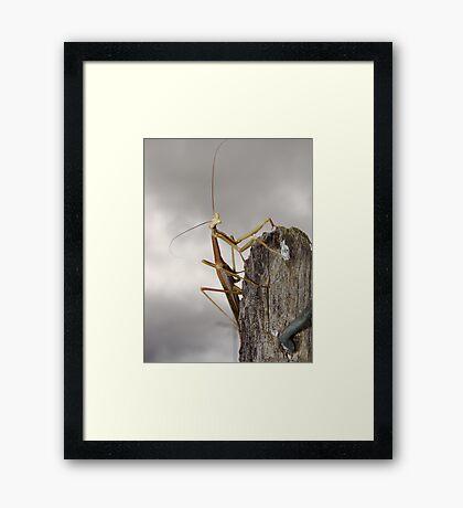Pray tell Framed Print