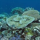Landaro Garden by Reef Ecoimages