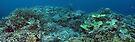 Binusa Point VI by Reef Ecoimages