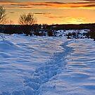 Winter Sunset, Waldridge Country Park, Durham. UK by David Lewins