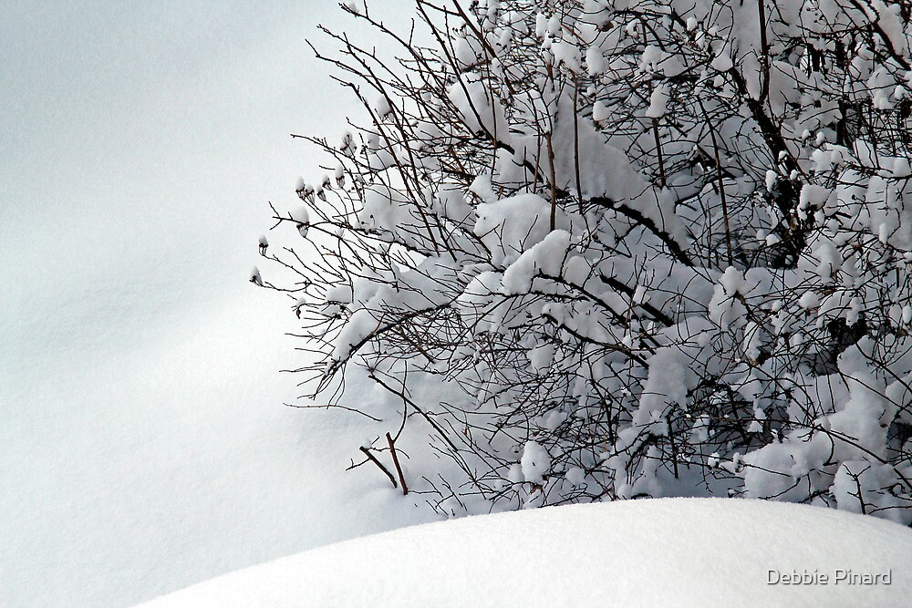 Bushes in Winter Series - 1 by Debbie Pinard