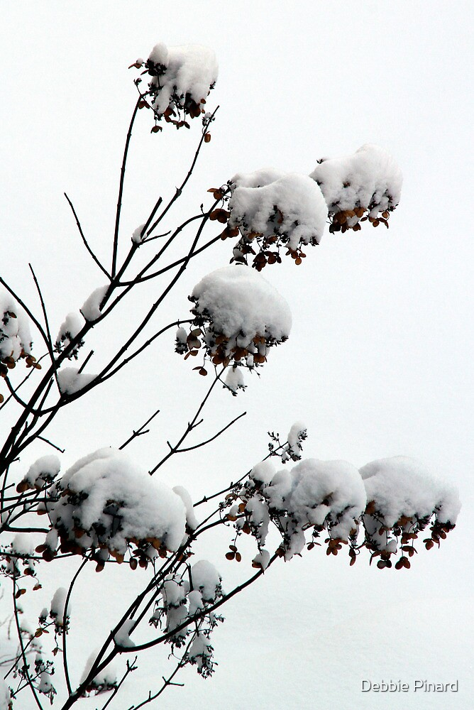 Bushes in Winter Series - 4 by Debbie Pinard