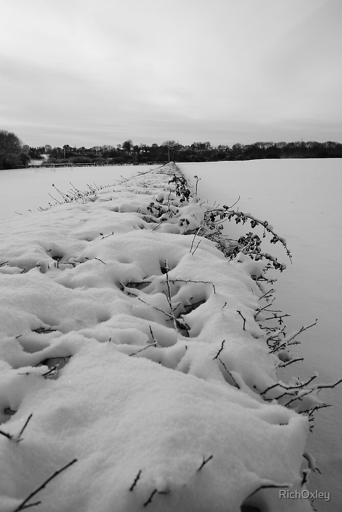 Snowy Hedge by RichOxley