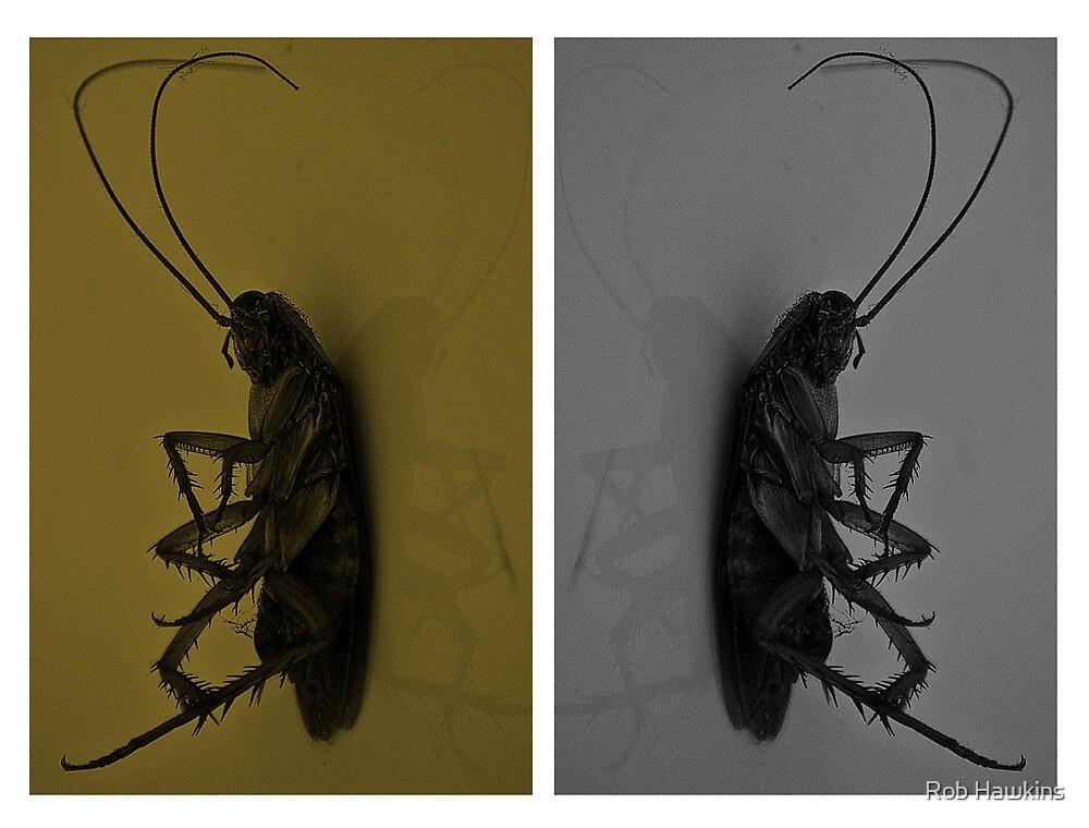 Cockroach..!! by Rob Hawkins