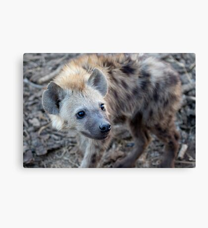 Young Hyena Canvas Print