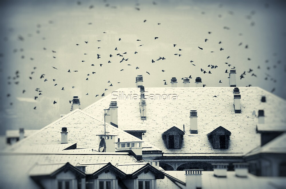 Winter roofs by Silvia Ganora
