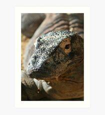 Komodo Dragon II at Lowry Park Zoo Art Print